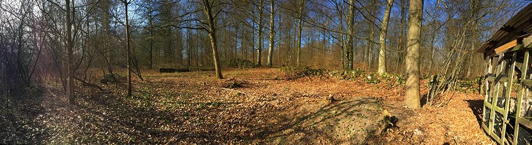 skogslikt